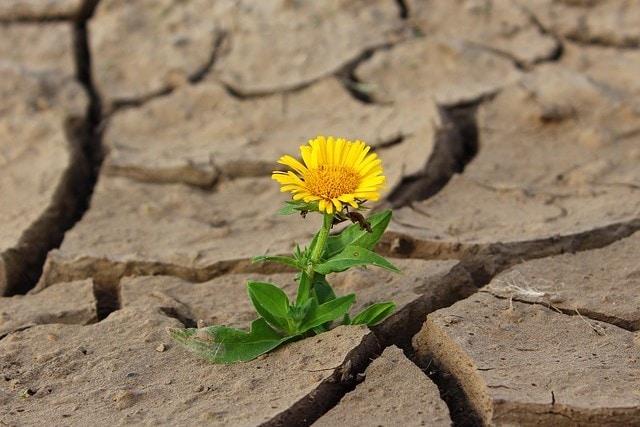 Blume Wüste (3)